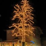 13. at-brixlegg-tree01_resize